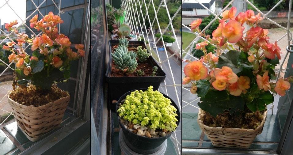"""Éricka Macedo, de Belo Horizonte (MG): """"Oito tipos de suculentas e flores que alegram meu apartamento minúsculo"""""""