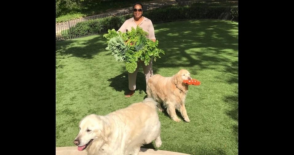 22. Oprah Winfrey, apresentadora norte-americana, atriz, e empresária, tem dezenas de cães e gatos adotados em sua casa. Oprah é assumidamente louca por pets
