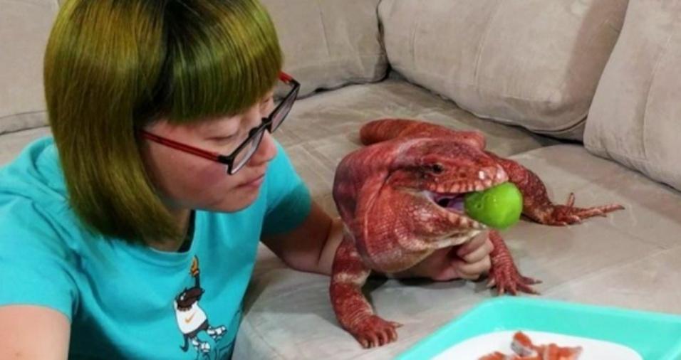 4. Mas o lagarto também adora frutas e é um amante dos kiwis