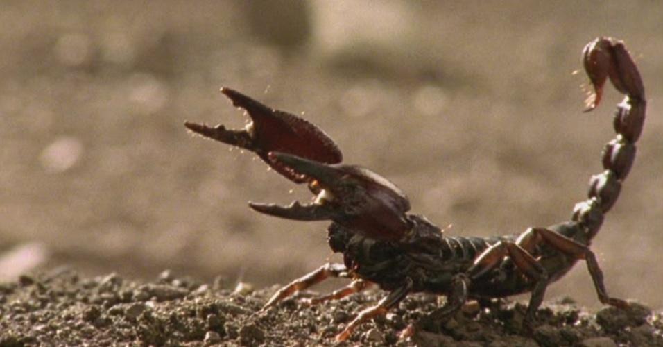 4. Ácaros, carrapatos e escorpiões são da mesma classe das aranhas
