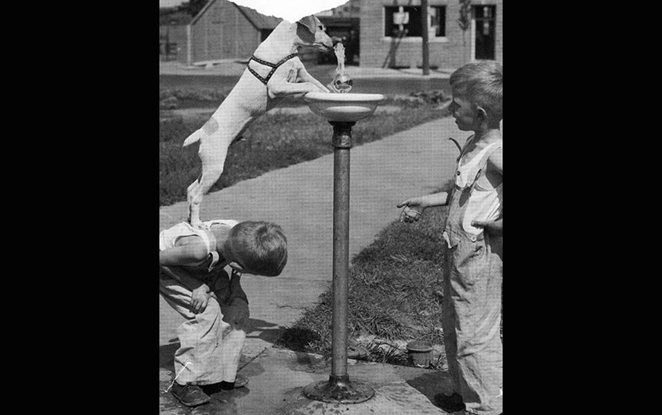 Garoto ajuda seu cão a tomar água em um chafariz
