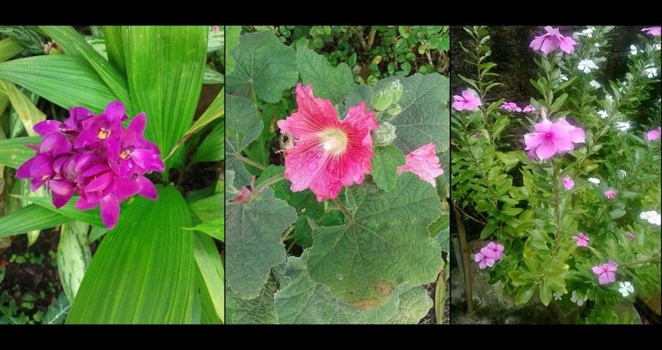 """Maria Teresa Paulino, Recife (PE): """"Minhas lindas flores"""""""