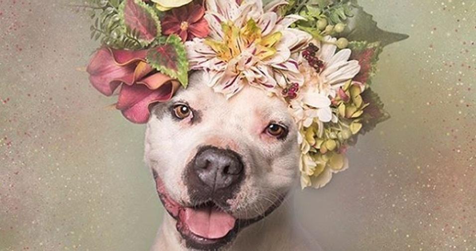 """10. A fotógrafa fez um post emocionante a respeito deste cachorro, que, assim como outros """"modelos"""" fotografados por ela, acabou sendo sacrificado. Segundo ela, o abrigo precisou tomar a decisão, uma vez que 20% dos cachorros acolhidos nesses tipos de albergues são sacrificados, em sua maioria pitbulls por causa da falta de interessados em adotá-los"""