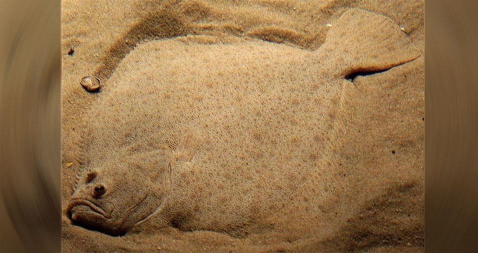 17. Peixe escondido no fundo de um tanque, no Aquário de Lisboa