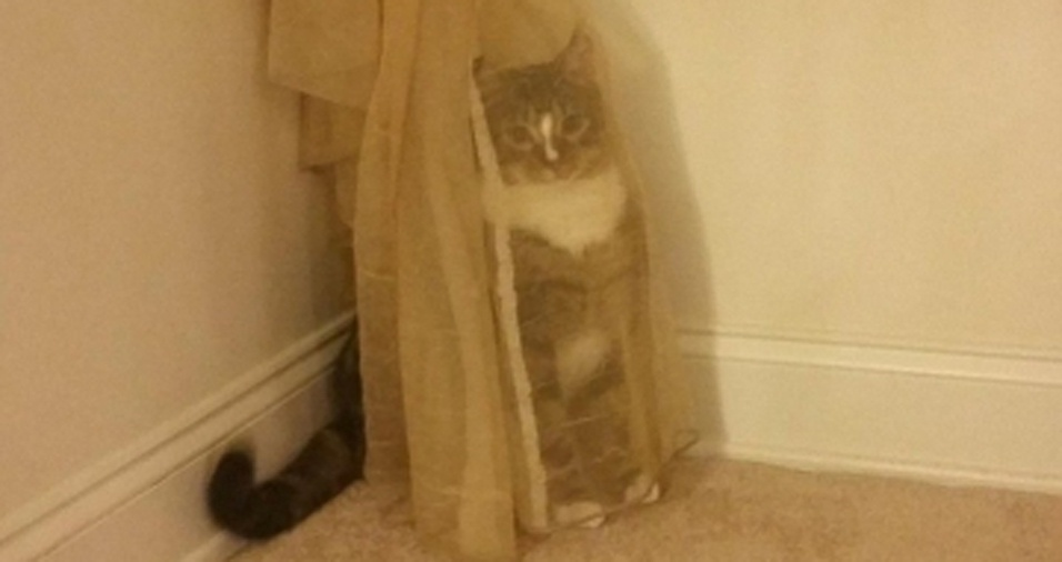 29. Este gatinho acha que está bem escondido