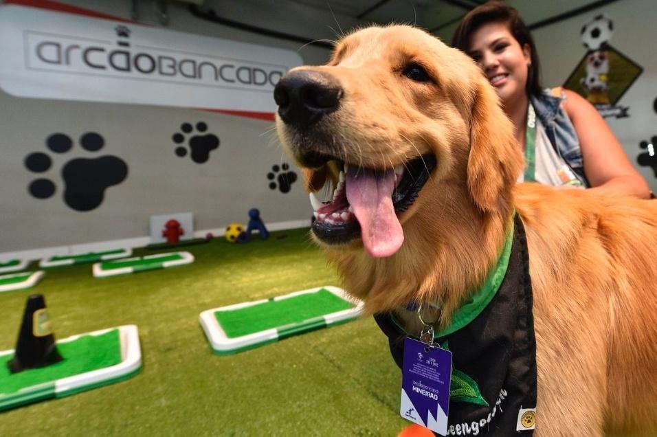 19.abr.2017 - Cão curte área exclusiva no estádio do Mineirão