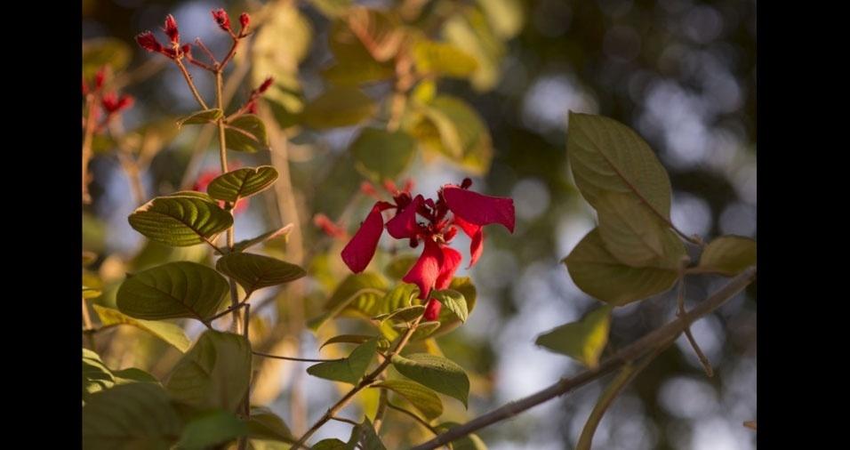 Leandro Frota enviou foto de uma linda flor que encontrou na UFAC, em Rio Branco (AC)