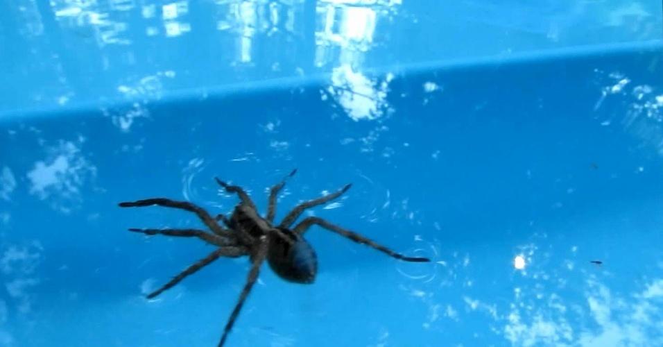 11. Aranhas podem respirar debaixo da água