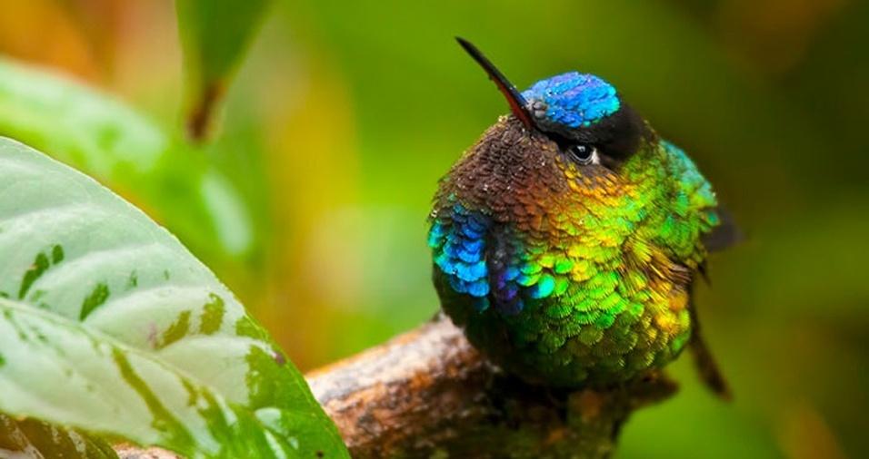 33. Além de fofo, esse pássaro também é lindo com suas cores diferentes