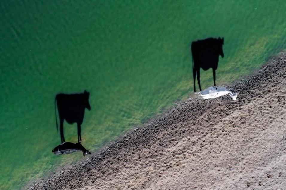 """A imagem de duas vacas venceu na categoria """"criatividade"""""""