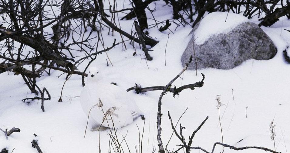 27. Pássaro branco confundido com a neve