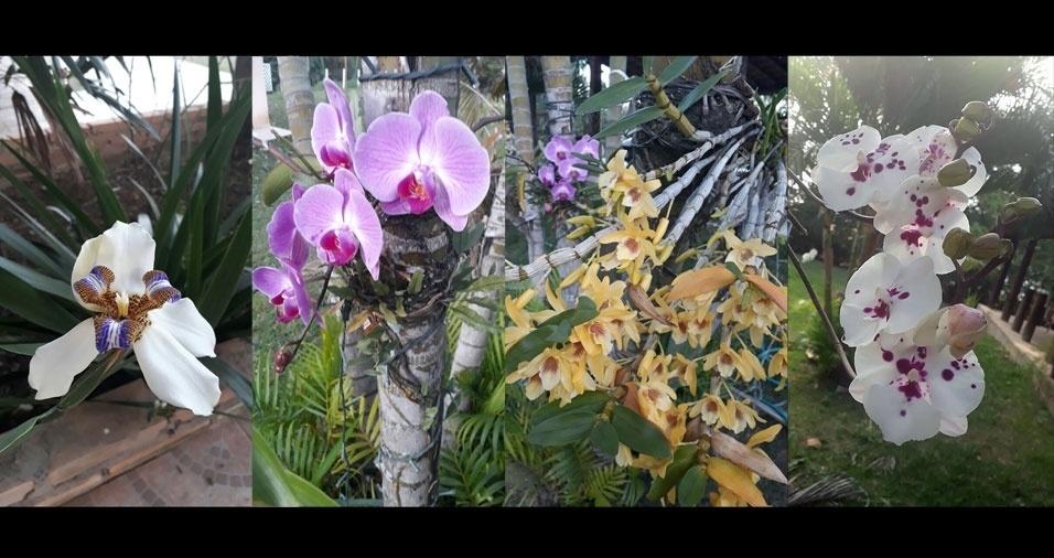 A coleção de orquídeas de Ana André, de Taubaté (SP), tem diversas cores diferentes