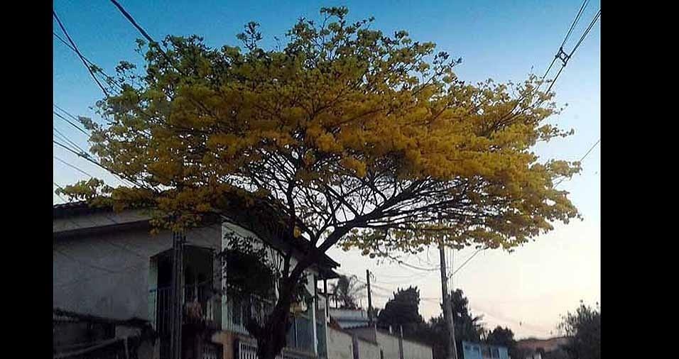 Eliane, de Araçariguama (SP)