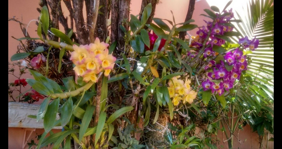 Jeannette Maria, de Botucatu (SP), mostra suas orquídeas
