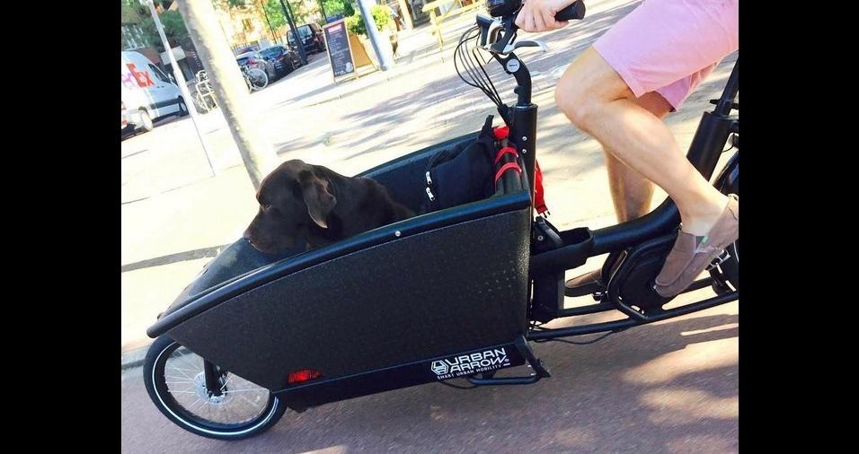 4. As caminhas para pets, de uso frontal ou traseiro, são forradas, confortáveis, seguras e não passam despercebidas. Seu cachorro vai amar