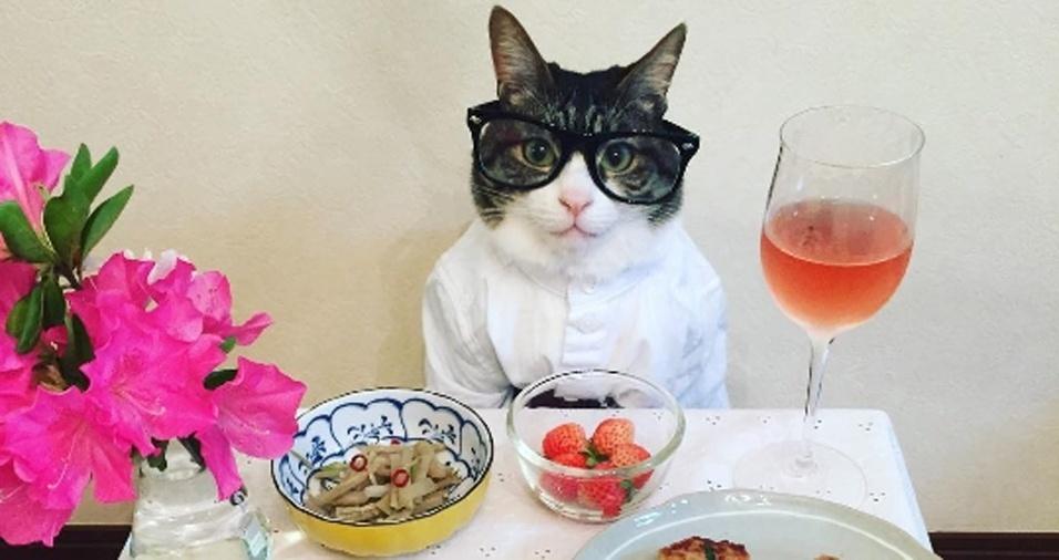 4. Para um jantar mais conceitual, coloque seus óculos e prepare-se para miar sobre a situação econômica do país