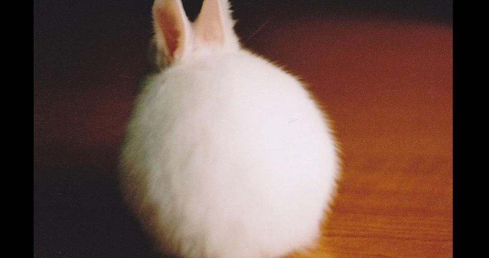 21. Parece que o coelho não quis posar para a foto, mas mesmo assim foi flagrado com toda a sua fofura