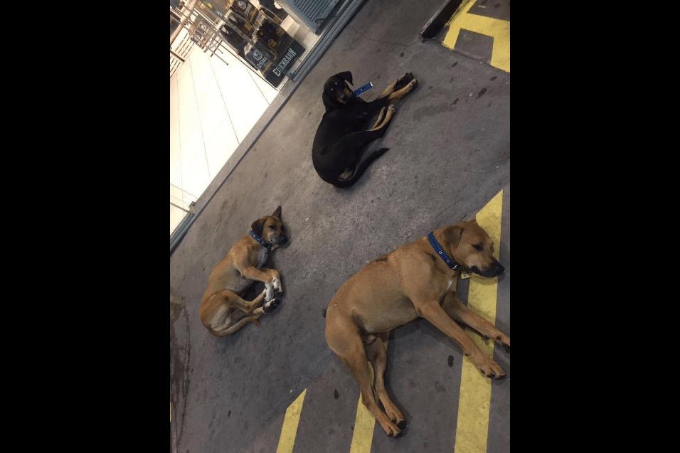 27.mar.2017 - Cães frequentavam o posto antes da mudança e foram acolhidos pela nova direção do local