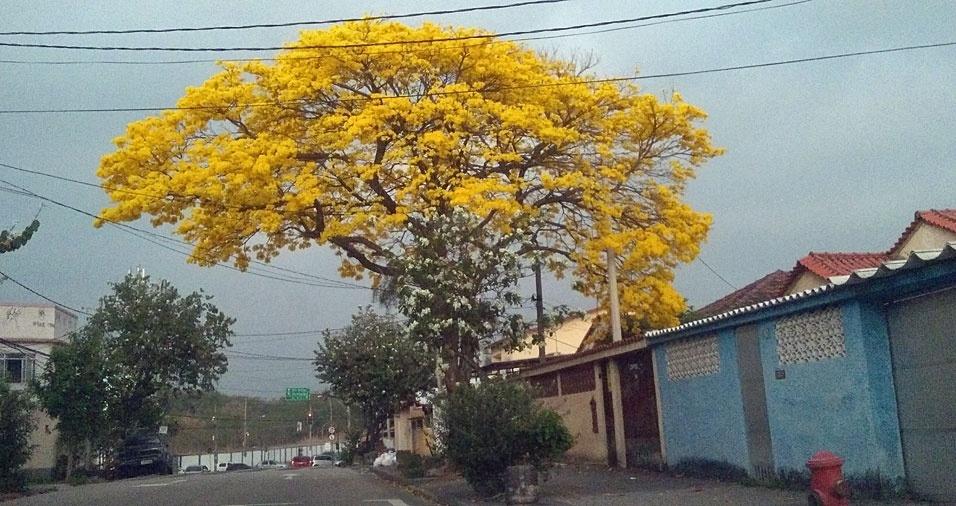 Lúcio Martins registrou uma linda árvore na rua Henrique de Albuquerque, em marechal Hermes, no Rio de Janeiro (RJ)