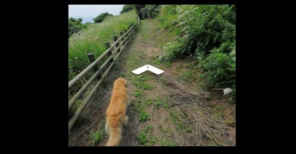 17.jun.2017 - Cachorro da raça Golden Retriever caminha pelas paisagens da ilha sul-coreana Ulleung-gun e aparece nas imagens do Google Street View ao seguir o fotógrafo que mapeava a região