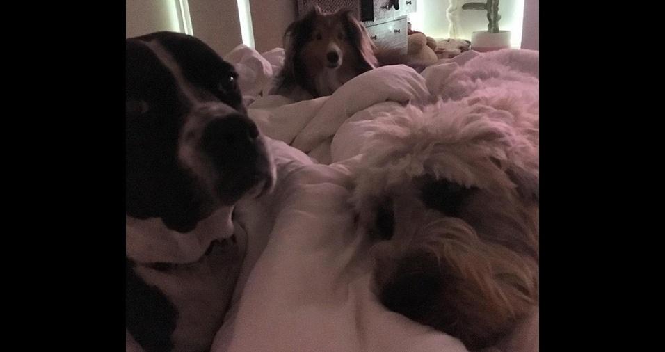 10. A cantora Miley Cyrus é apaixonada por pets e é dona de vários cães, uma gata, e uma porquinha chamada Babba Sue. Na foto estão Dora, Emu e MaryJane