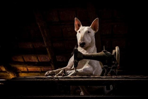 6.jan.2016 - Resultado das fotos da pitbull Claire, tiradas por sua dona, Alice van Kempen, é bastante original e inusitado
