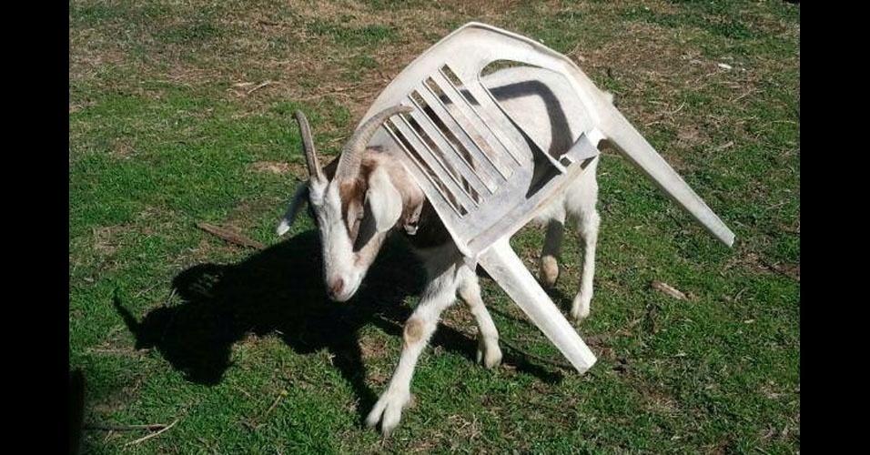 39. Esta cadeira deu bode