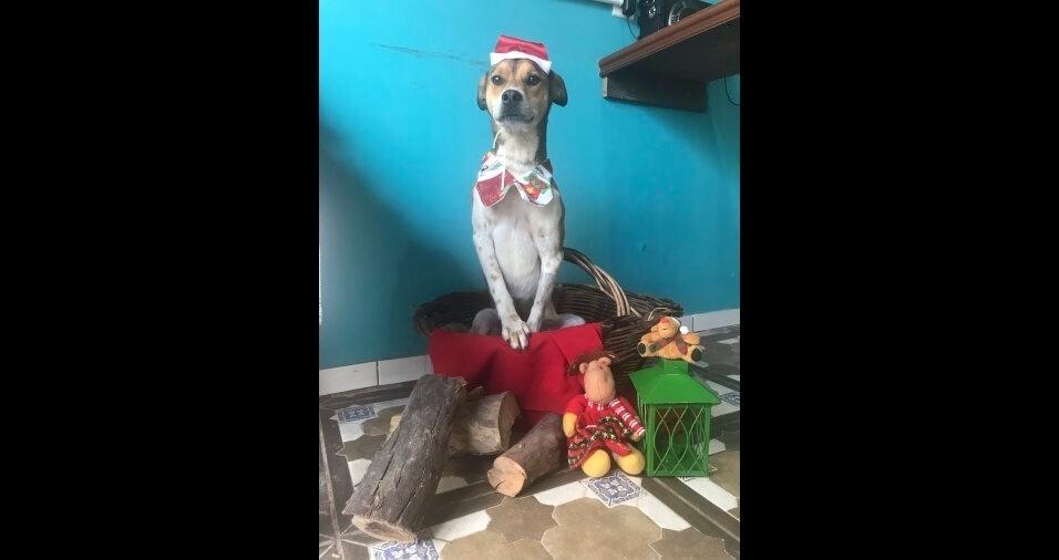 """""""Foto de Natal do meu vira-lata de nome Rebolo, conta Jossoel Soares"""", de Canoas (RS)"""