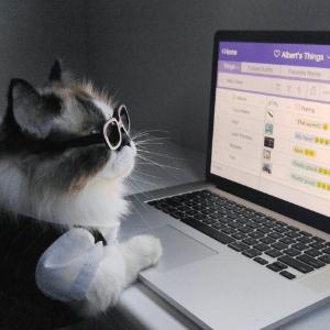 Reprodução/Instagram/Albert Baby Cat