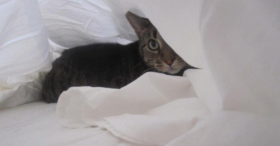 11. Entre os lençóis