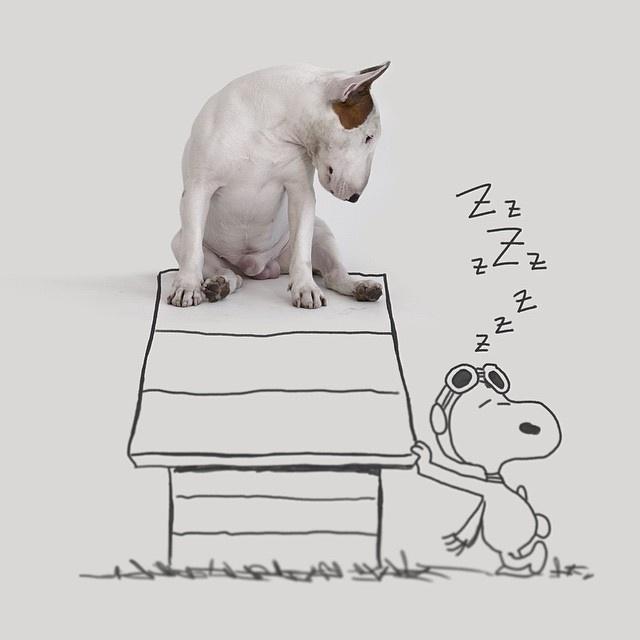 9.dez.2015 - Bull terrier Jimmy Choo interage com o cachorro mais famoso dos quadrinhos