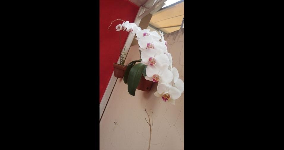 Renato Rodrigo, de Presidente Prudente (SP), e sua orquídea branca