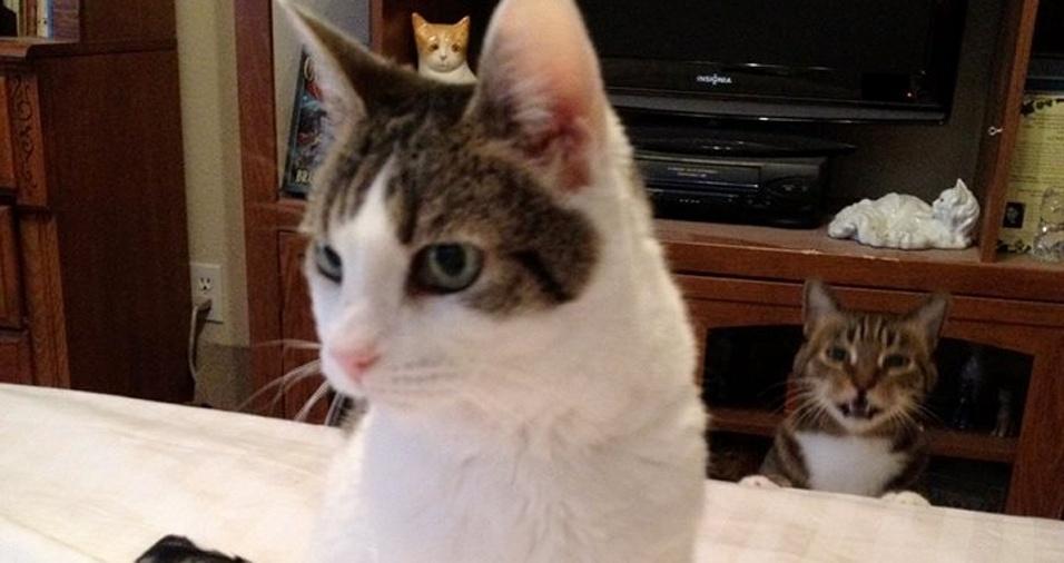 10. O gatinho da frente bem que conseguiu manter a pose de modelo para a foto, mas teve alguém que acabou chamando mais atenção na imagem
