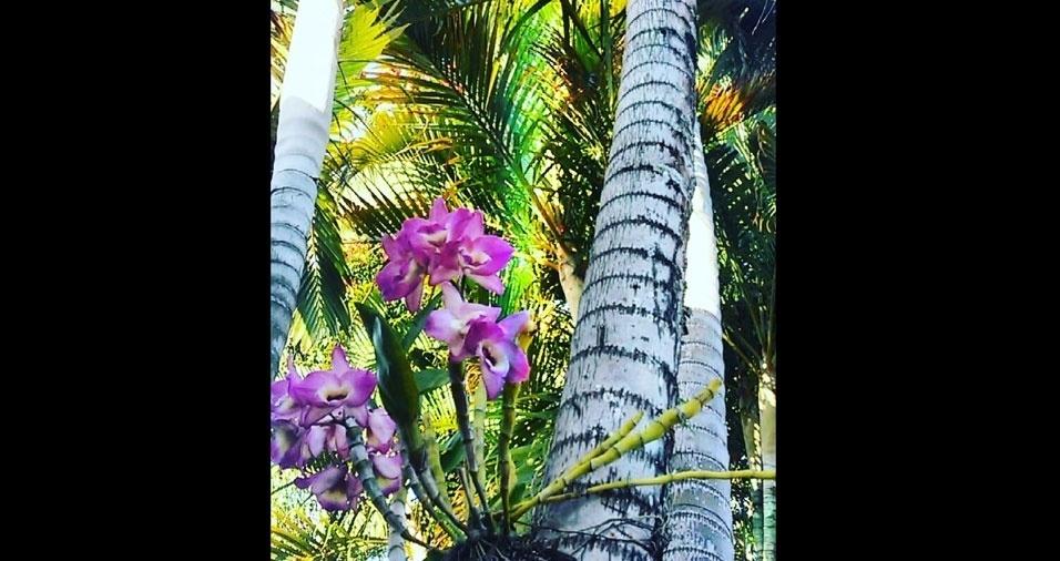 Ana Maria Firmino Aguiar, de Piraí (RJ), enviou foto de sua linda orquídea