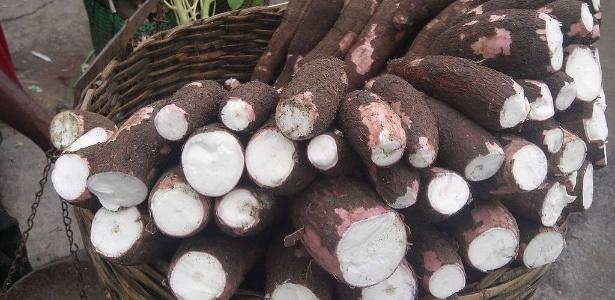 Estudo molecular sugere que a mandioca-mansa ou macaxeira possui uma história de dispersão diferente da mandioca-brava. Domesticação envolveu a seleção de variedades com menores teores de ácido cianídrico, possibilitando o consumo