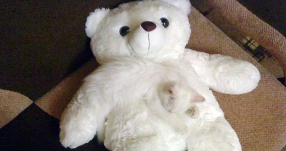 21. O urso e o gato