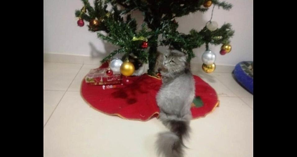"""""""Nina e Valenthynna, as guardiãs da árvore de Natal!!!"""", conta Dayane, de Campo Mourao (PR)"""