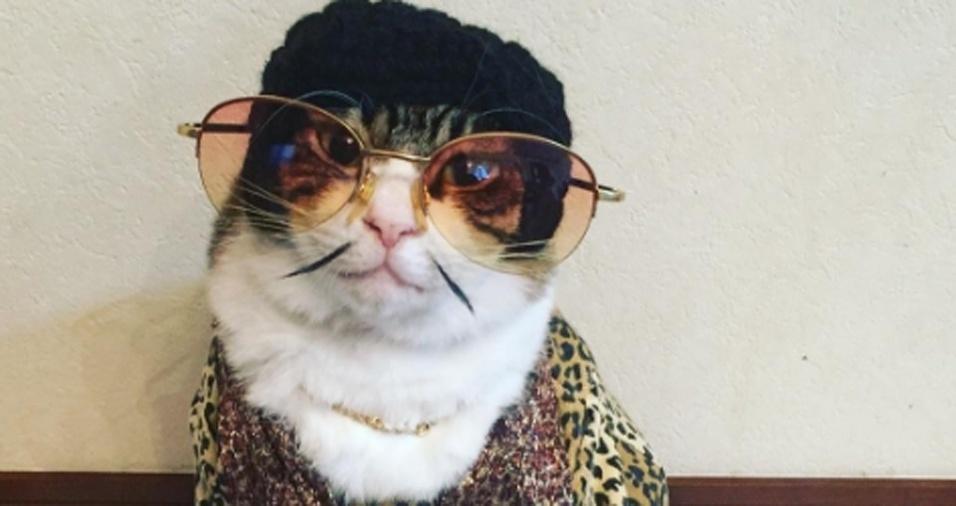 28. Rie Matsui, a humana de Maro, também tira algumas fotos do gatinho com fantasias em geral, embora, atualmente, a especialidade dos dois seja apresentar o jantar com o felino à mesa