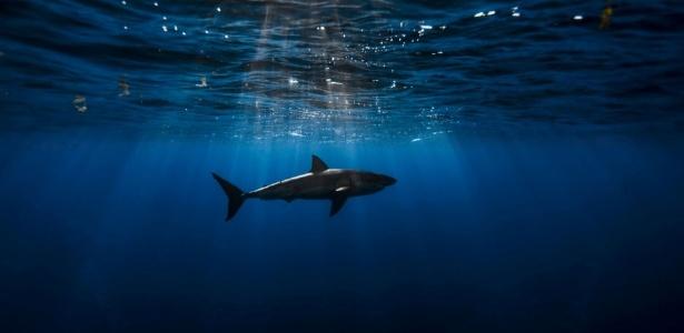 Pulseira emite um campo eletromagnético na água que afasta o tubarão