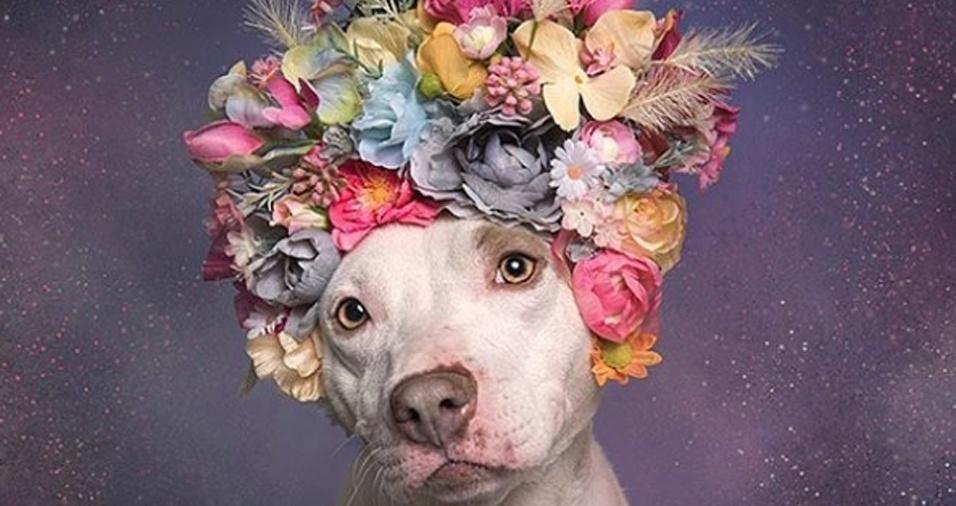 1. O poder das flores. Este é o nome da série de imagens da fotógrafa Sophie Gamand. Ela compartilha em seu perfil no Instagram registros de diversos cachorros, mas tem uma dedicação especial pelo seu trabalho com pit bulls. Na foto, Priscilla, que depois de sofrer com maus tratos foi acolhida em um abrigo e fotografada por Sophie