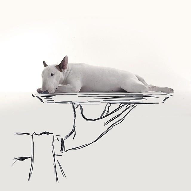 9.dez.2015 - Conta no Instagram do ilustrador Rafael Mantesso faz sucesso com imagens protagonizadas pelo bull terrier do artista