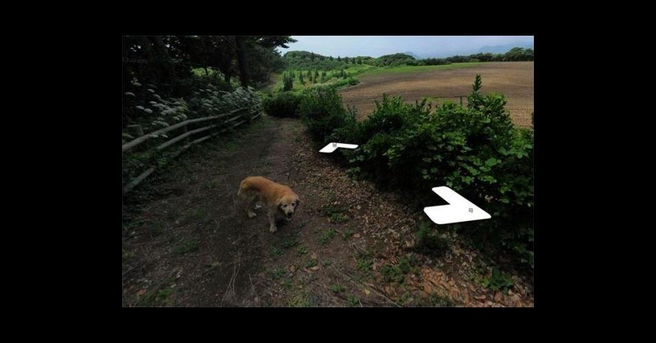 """17.jun.2017 - Este cãozinho """"photobomb"""" viralizou nas redes depois de aparecer nos registros feitos para o Google Street View na ilha Ulleung-gun, localizada na Coreia do Sul"""