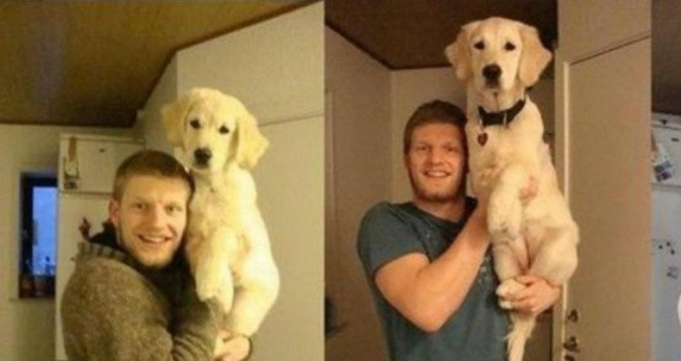 15. O cachorrinho ficou mais esbelto com o tempo