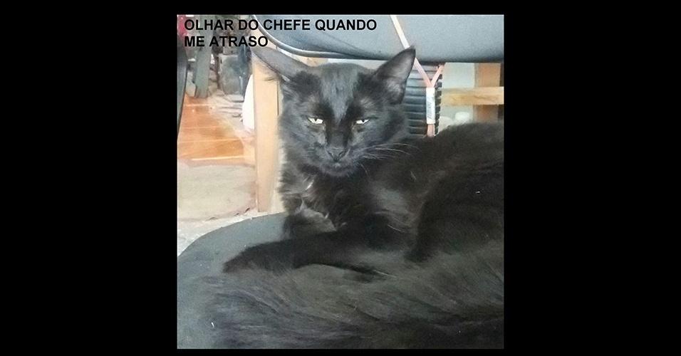 """23.jan.2017 - A internauta Jennifer, de Pelotas (RS), mandou um felino que faz a """"carinha"""" que o chefe faz quando alguém se atrasa. Envie as imagens engraçadas que você recebe em seu WhatsApp para o BOL pelo número (11) 97335-6855 junto com o seu nome e cidade."""