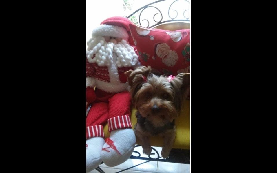 Joseane Veber, de Biguaçu (SC), caprichou nas decorações de Natal, e até sua mascote Mia entrou no clima