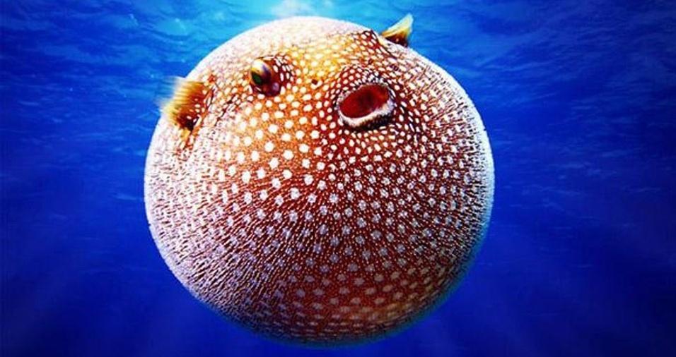 16. Mas quem disse que os bichinhos que vivem na água também não podem ser bolinhas?