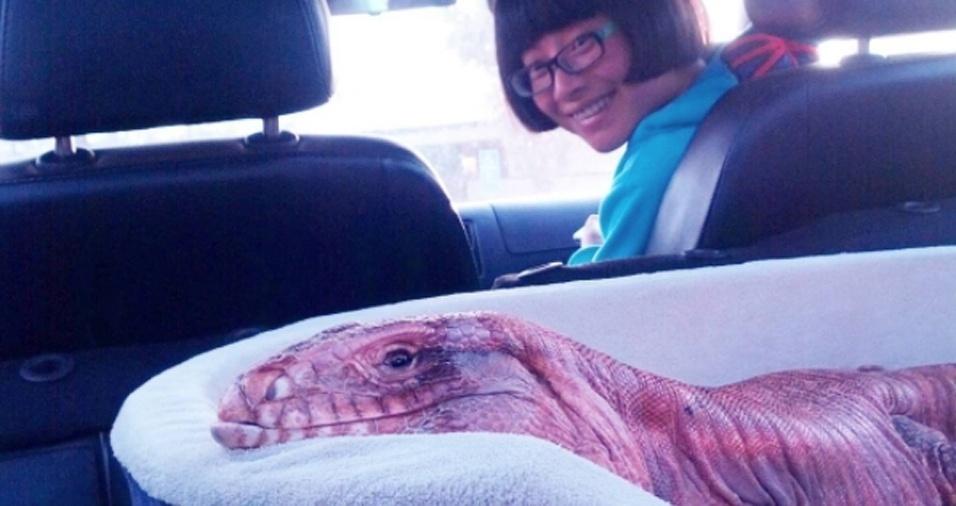 14. Ele também adora andar de carro em sua confortável cama