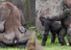 Gorilas gays transam em zoológico na Holanda (Foto: Reprodução/Facebook)