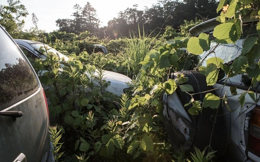 13.out.2015 - Depois de quatro anos sem manutenção, arbustos têm tomado os carros que foram abandonados