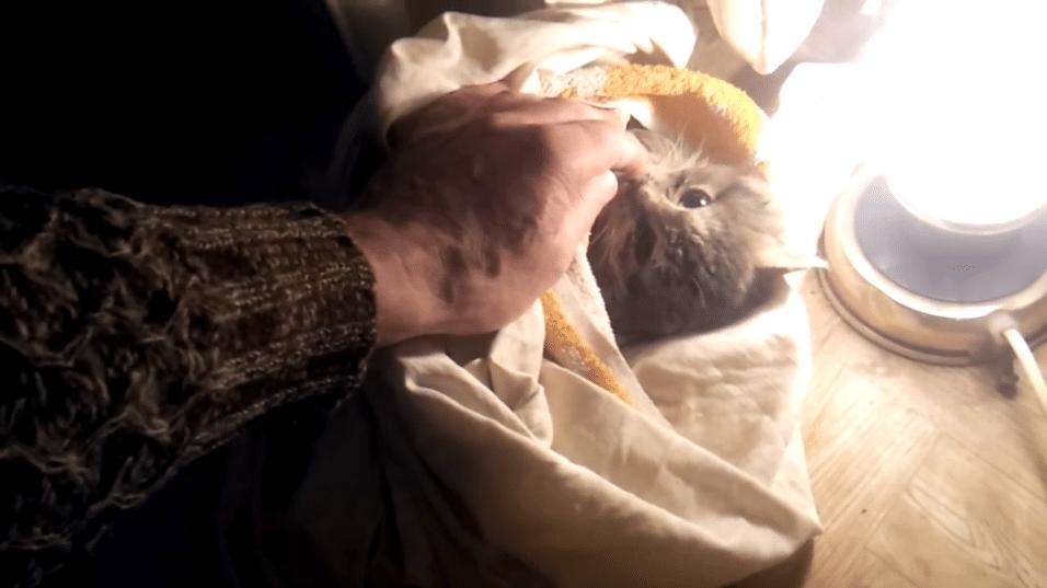 Batizada de Nika, o gato teve o rabo amputado devido ao congelamento